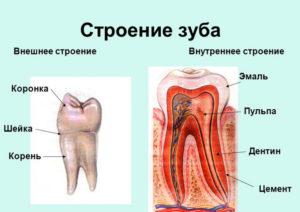 Лечение корневых каналов (Эндодонтия)